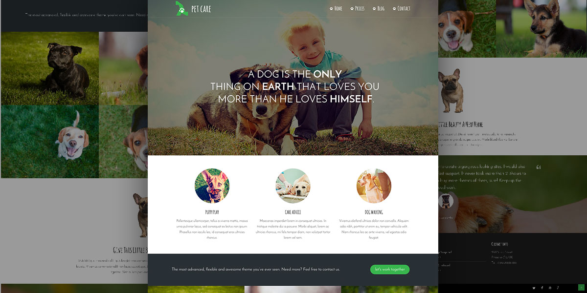 Lambda Pet Care Theme